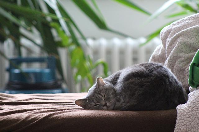 5 vecí, ktoré vám vo vašom dome môžu brániť pokojnému spánku