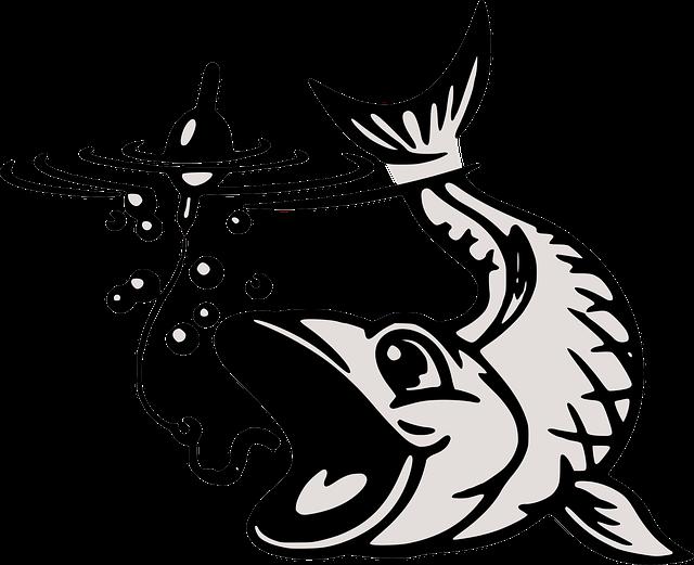 Rybolov a rozdiel medzi návnadou a nástrahou